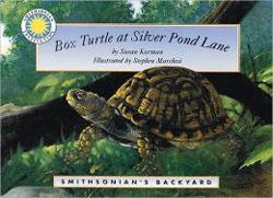 Box Turtle at Silver Pond Lane Smithsonian's Backyard